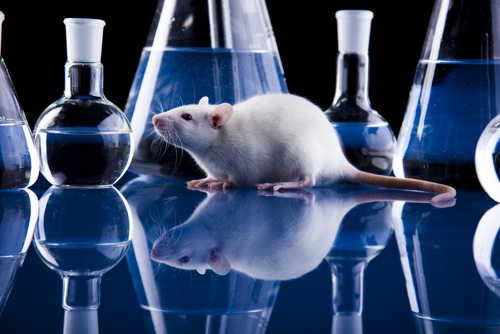 Mavoglurant Rescues Specific Neural Networks in FXS Mice, Study Finds