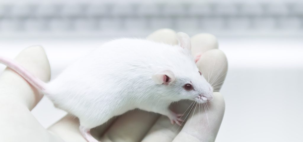 Single Early-Life Seizure Leads to Fragile X-Like Behaviors Later in Life, Mouse Study Finds