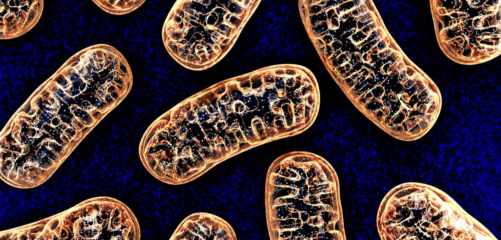 Defective Mitochondria Could Explain Neurological Impairment in Fragile X, Research Shows