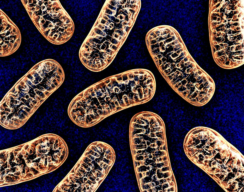 Mitochondrial Deficits In Children With >> Defective Mitochondria Could Explain Neurological Impairment In