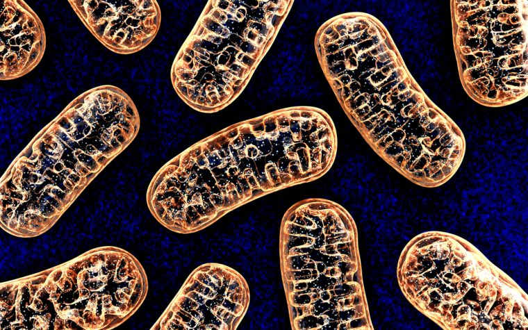 mitochondria and fragile X