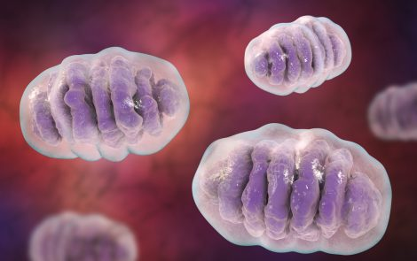 Closing Leaky Mitochondria Halts Behavioral Problems in Fragile X, Study Suggests